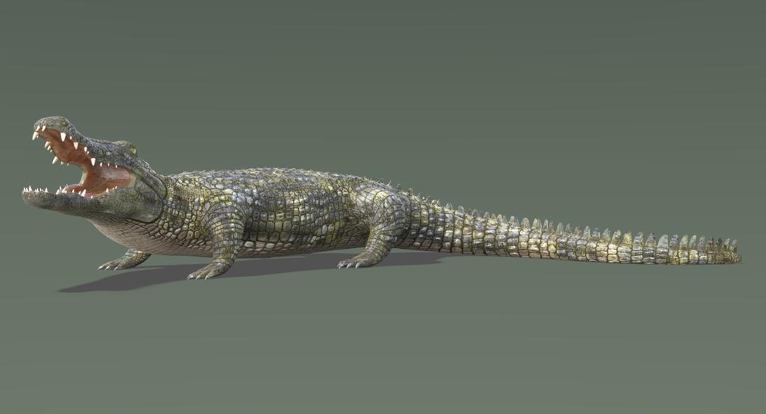 Crocodile-1.png