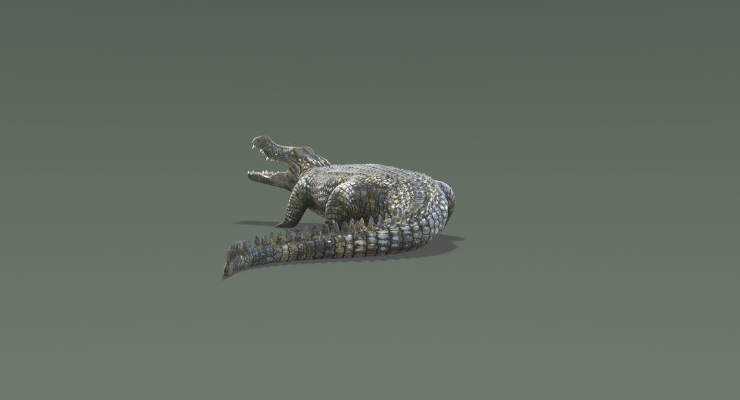 Crocodile-11.jpg