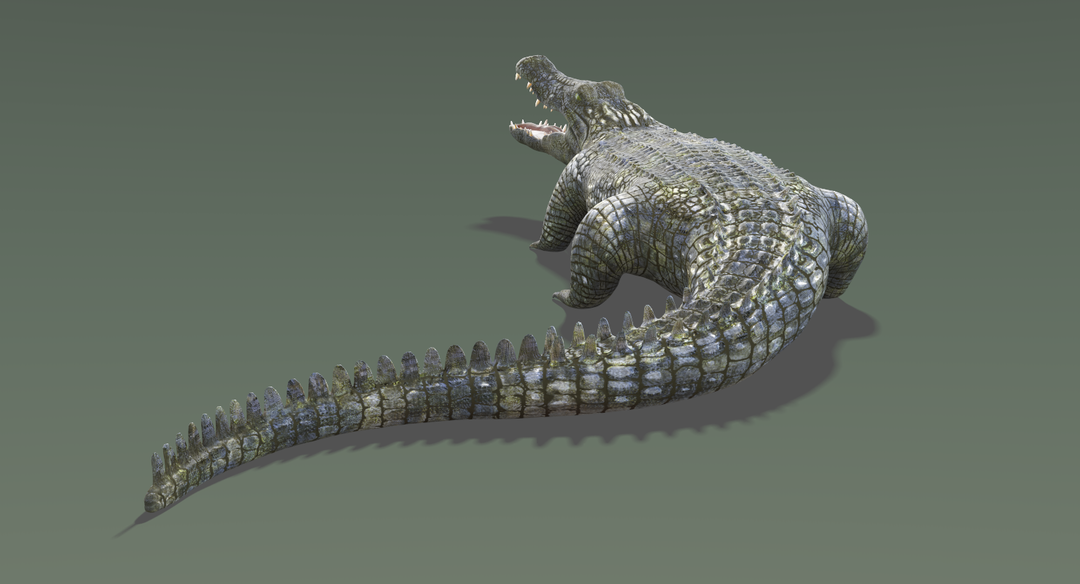 Crocodile-3.png