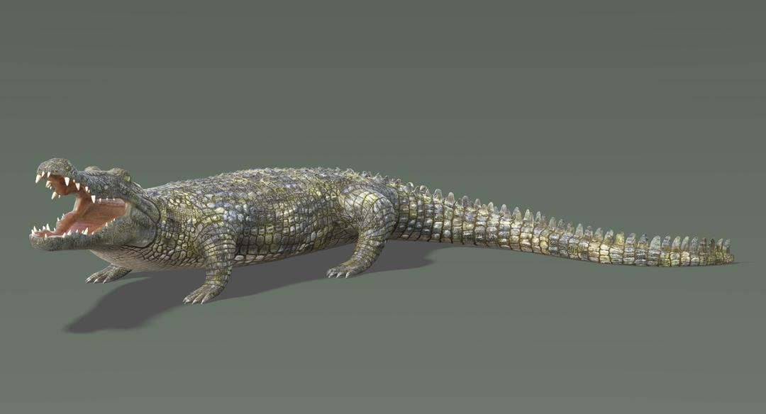 Crocodile-5.png