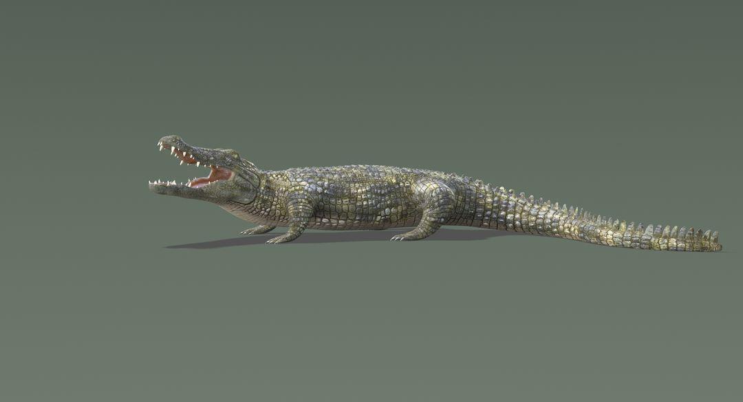 Crocodile-8.jpg