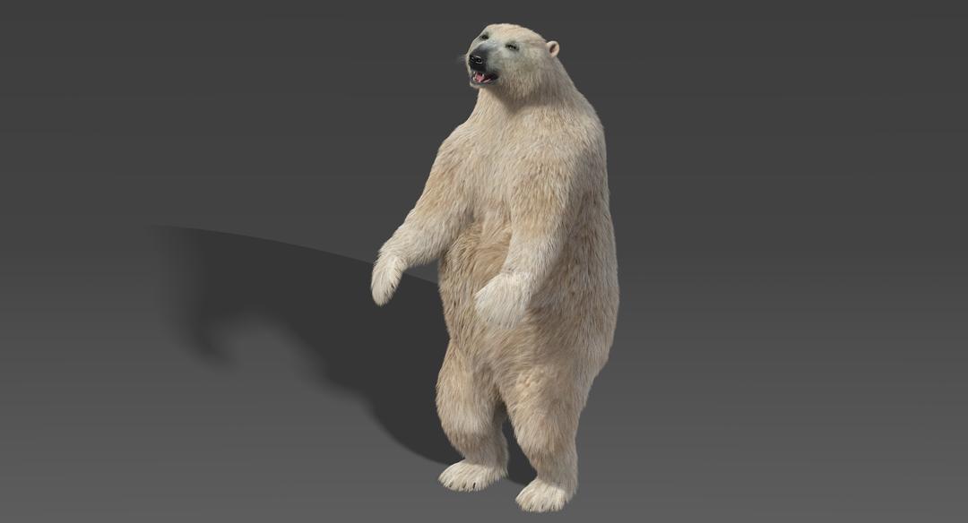 Bear-Standing.png