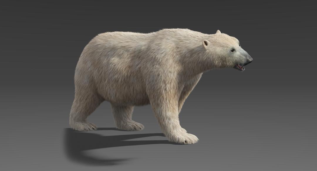 Polar-Bear-1.png
