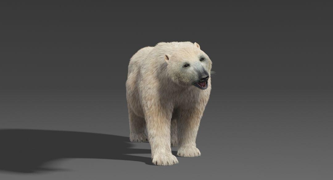 Polar-Bear-10.jpg