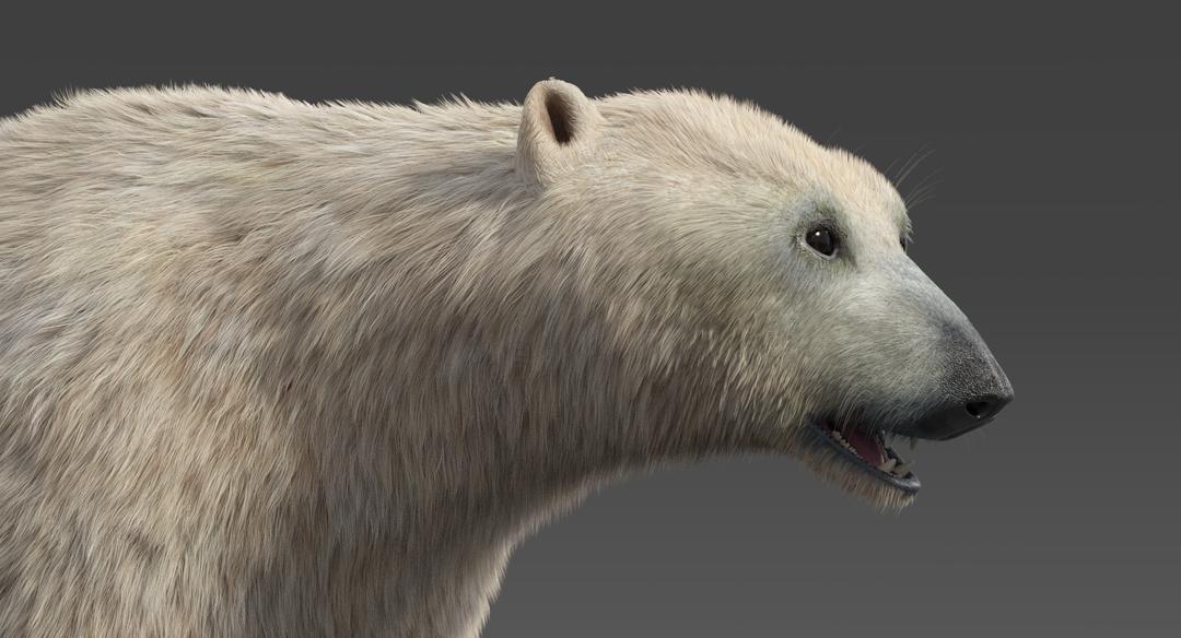 Polar-Bear-14.png