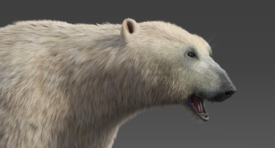Polar-Bear-15.png