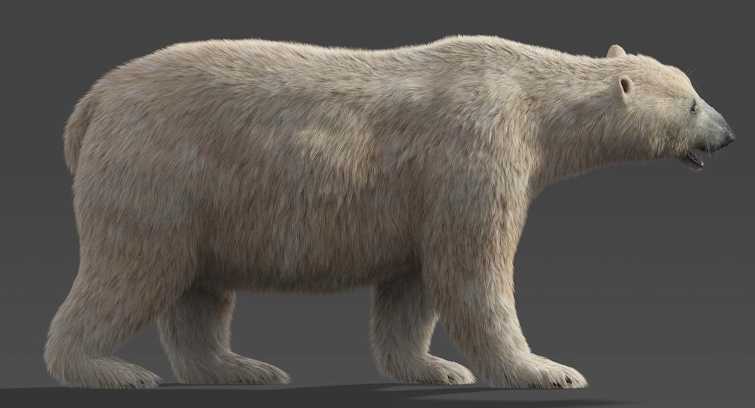Polar-Bear-2.png