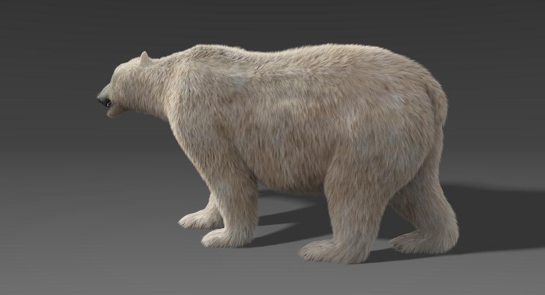 Polar-Bear-3.png