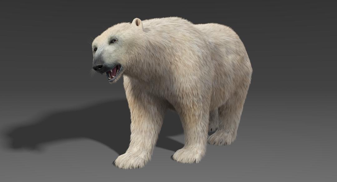 Polar-Bear-6.png