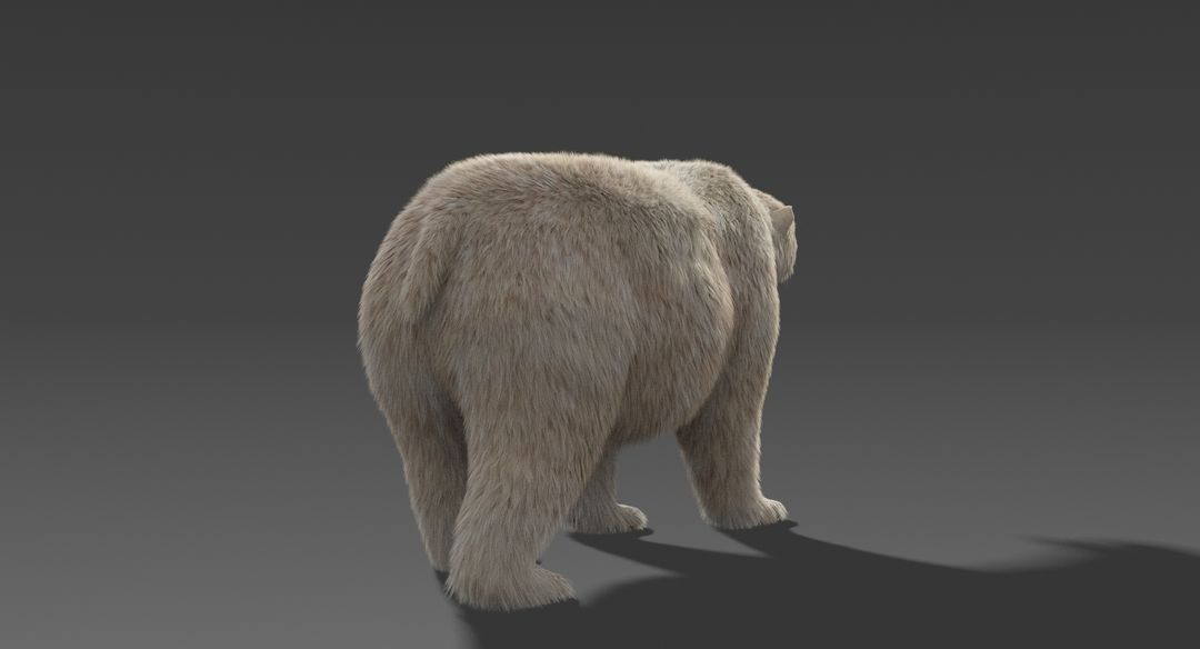 Polar-Bear-9.jpg