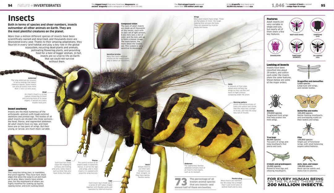 digital-wasp.jpg